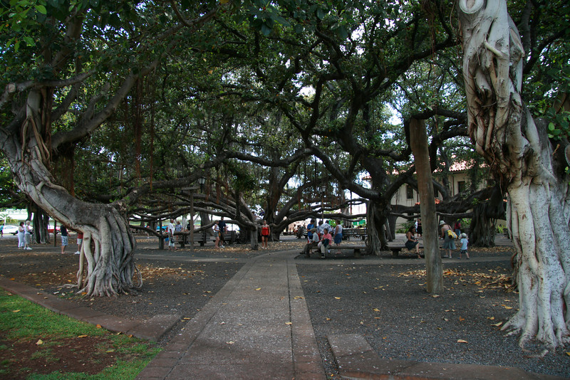 Lahaina Outing (28)