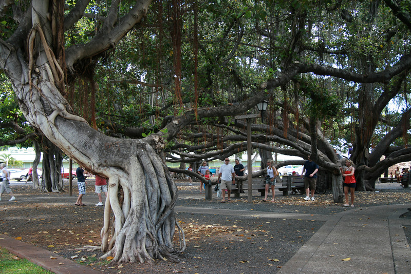 Lahaina Outing (29)
