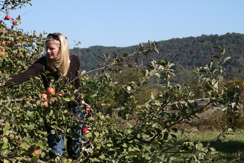 Apple Picking with Auntie Erin (9)