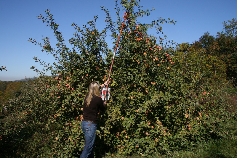 Apple Picking with Auntie Erin (3)