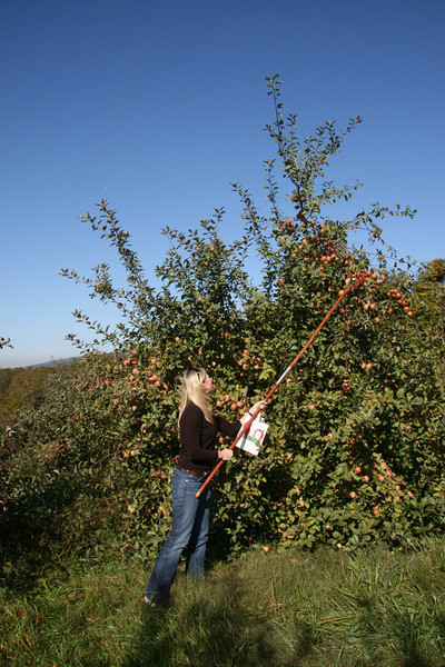 Apple Picking with Auntie Erin (1)