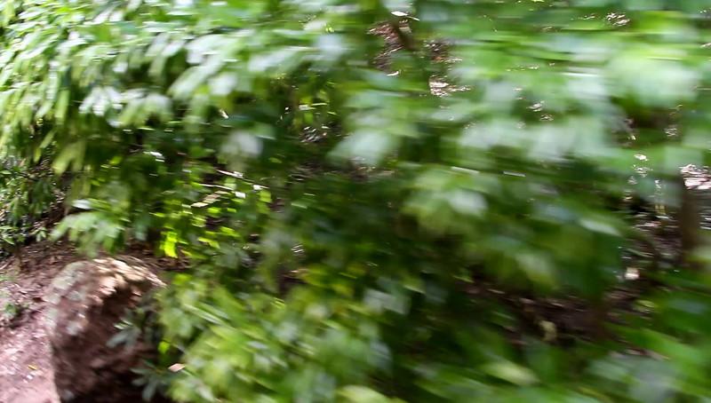 Disney 2009 Oct Shades of Green HDTV Clips (24)