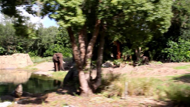 Disney 2009 Oct Shades of Green HDTV Clips (51)