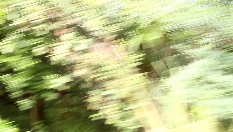 Disney 2009 Oct Shades of Green HDTV Clips (29)