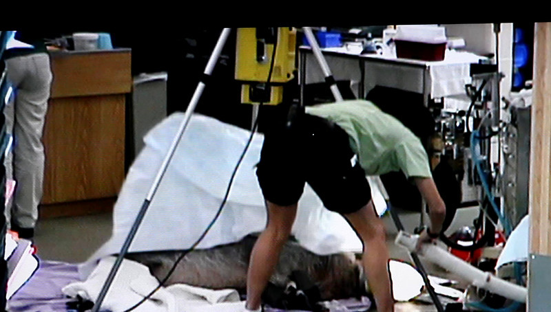 Disney 2009 Oct Shades of Green HDTV Clips (37)