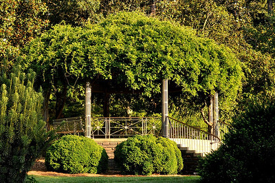 this gazebo is covered in Wysteria