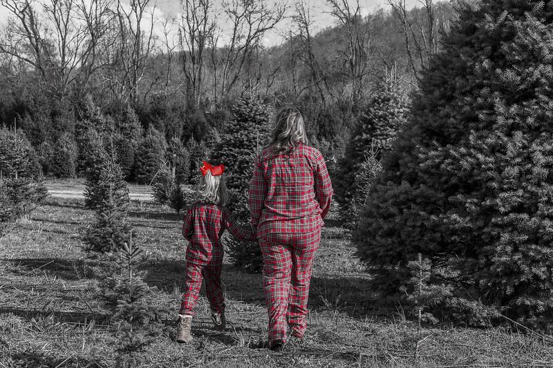 2019 Tree Farm-Taylor-00019