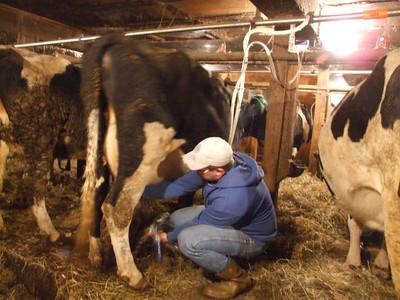 david milking