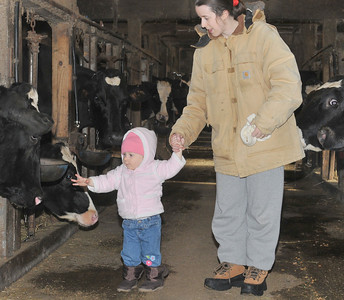 inspecting the cows for the first time