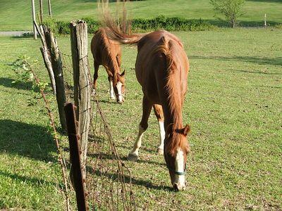 neighbor's horses