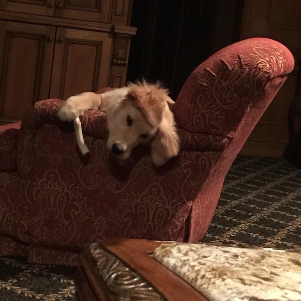 River loving his chair!