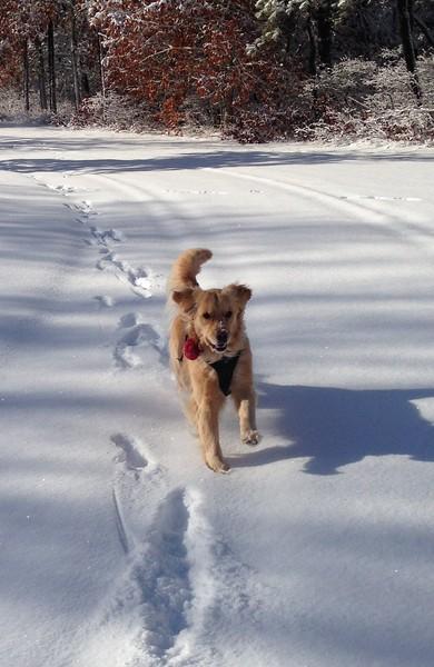 Kaia enjoying our 2016 first snow!