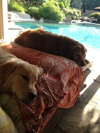 Cassidy and Oliver after a day in the pool!