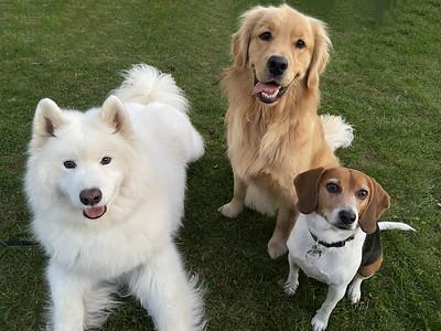 2021 Oct - Finn with friends