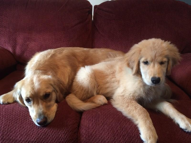 Maisy and Kaija  Enjoying the couch!