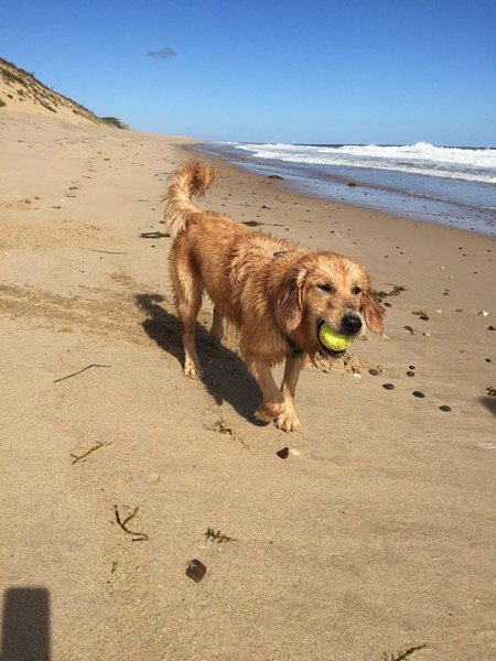 Faye enjoy the beach and her ball summer 2015