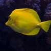 Birch Aquarium - La Jolla