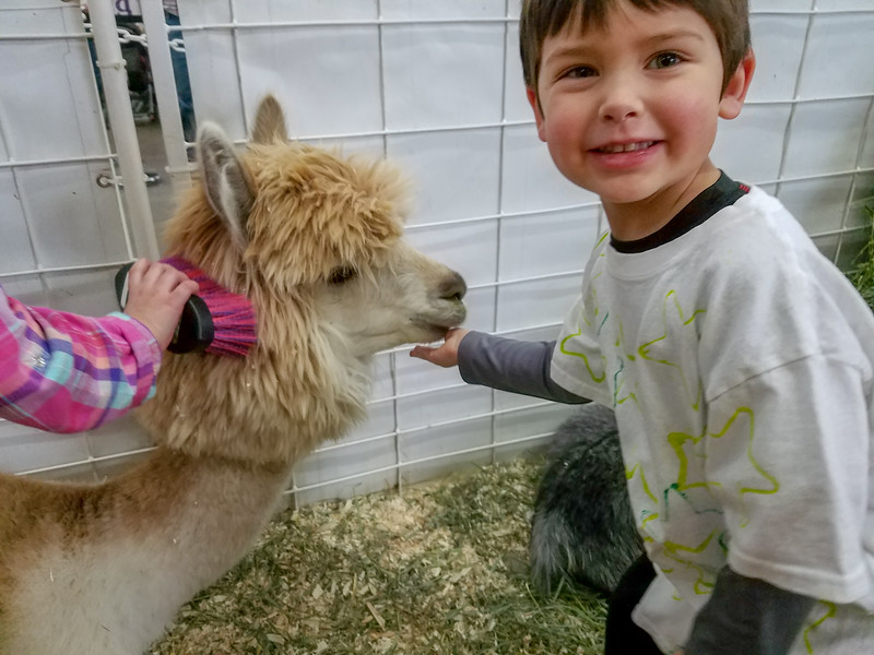 In the petting zoo at the National Western Stock Show (Trevor's class field trip)