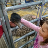 Visiting with Elmer the Emu at the National Western Stock Show (Trevor's class field trip)