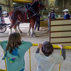 Checking out some Clydesdales at the National Western Stock Show (Trevor's class field trip)