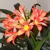 Ann McWalter Plant