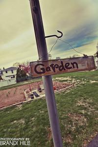 """Mr. """"Tony"""" Calabrese's garden."""