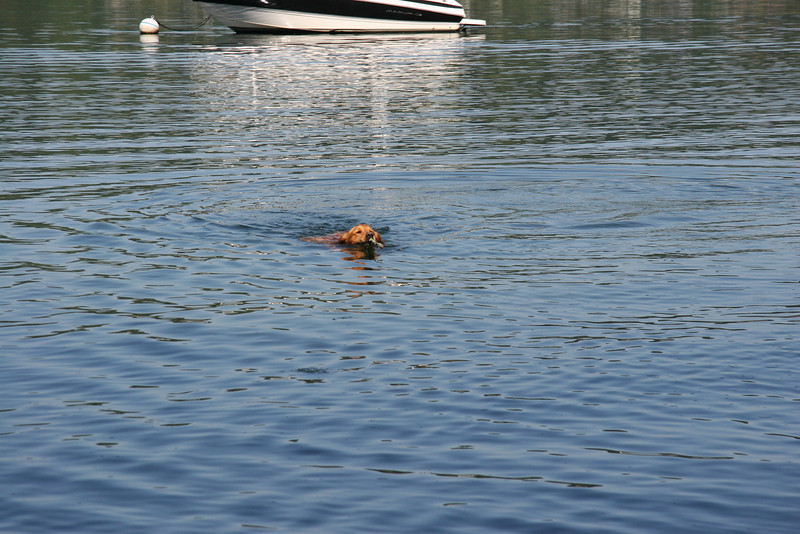 Coops swimmin'