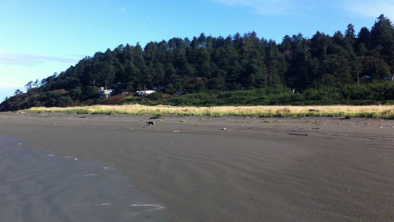 Zoomies on the beach.