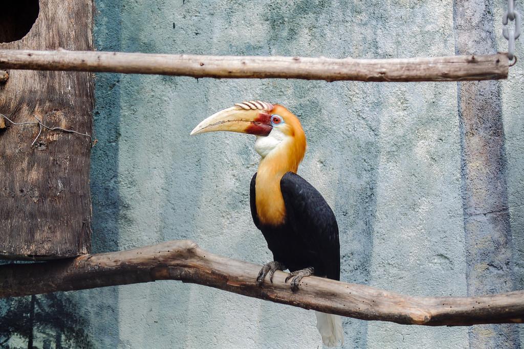 Magnificent Toucan Bird at Batu Secret Zoo