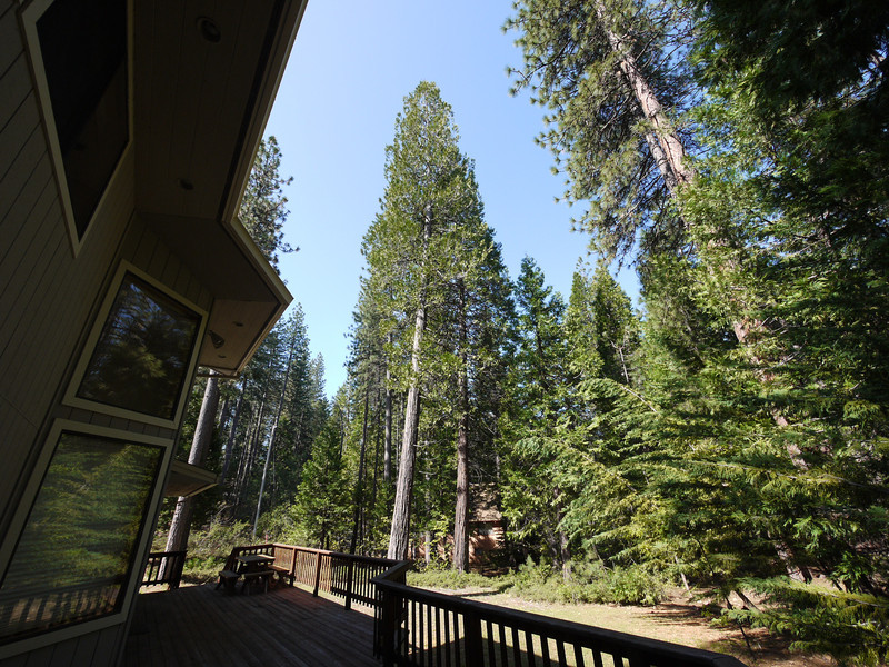 Rear deck with trees