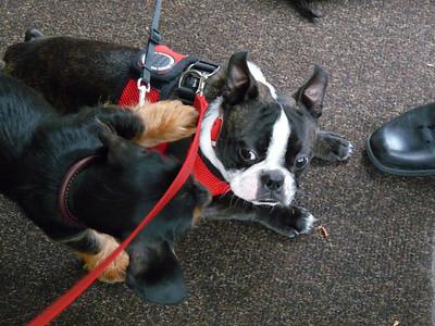 Philo & Daisy