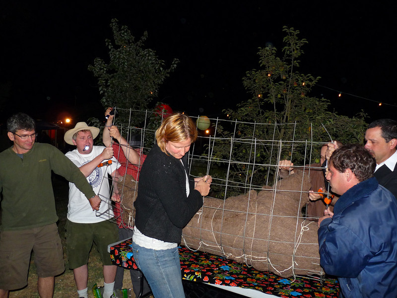 Lift! Lift! That's a big pig