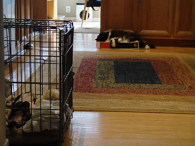 Philo in his crate house, Winky on his box.