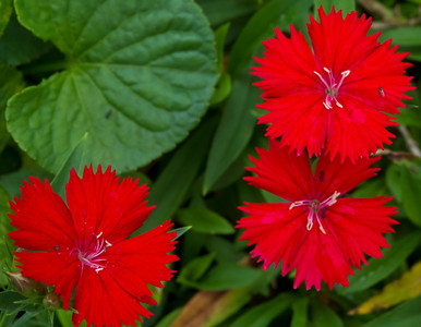 Awesome red flowers can't remember what they were called...