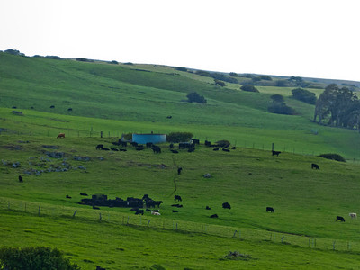 Paniolo (Hawaiian cowboy) country in the Northern part of the Big Island, on Kohala Mountain Road.