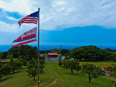 The Greenwell Farms coffee plantation. Link: http://www.greenwellfarms.com/coffee-tour