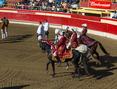 The Cavaleiros enter the bullfight arena on their specially trained Portuguese Lusitano horses.They are from left to right, Sario Cabral, Luis Rouxinol, and the lovely Sonia Matias.