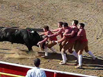 "A 200 frame per second slow-motion video of the Forcados FIFTH try of ""pega de cara"" with the same bull. This time they get him! The next two still photos are of the same successful attempt."