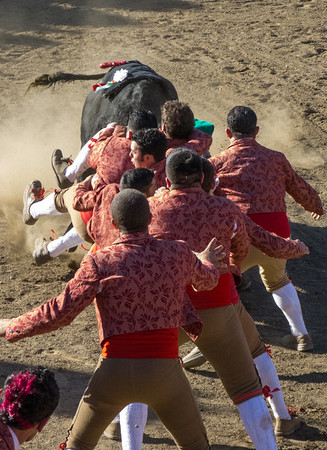 "High speed still sequence: (Next 11 photos) The Forcados go for a FOURTH try of ""pega de cara"" with the same bull."