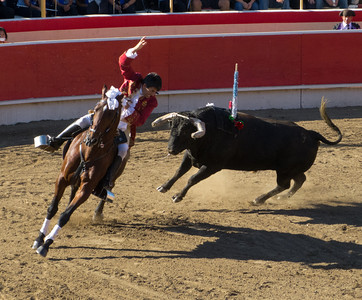 Cavaleiro Luis Rouxinol places a second bandarilha (javellin) on the bull that took him and his horse down earlier.