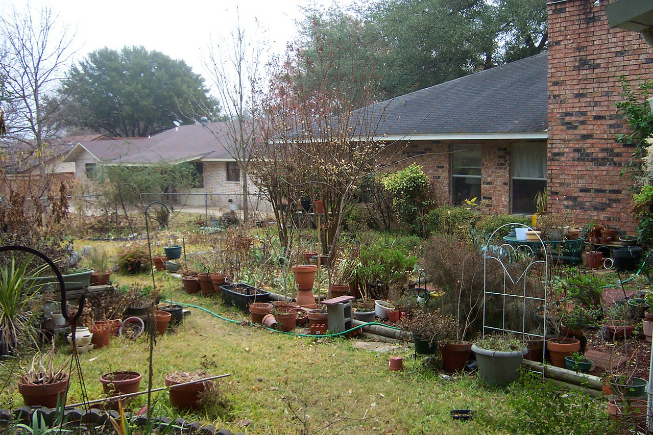 The backyard is Dad's domain.  He's planted one or two things back here...