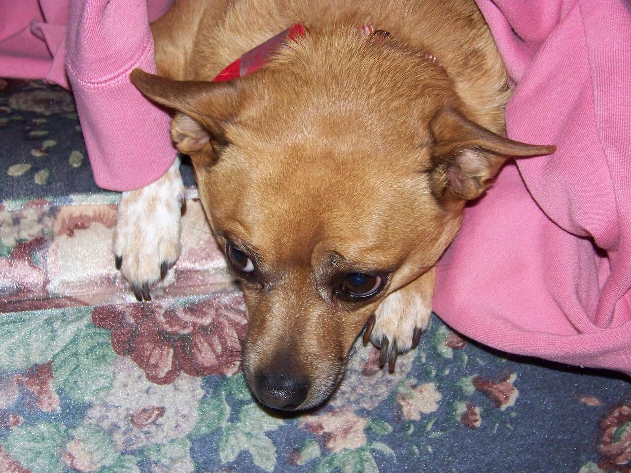 Jenna's dog Roxy.