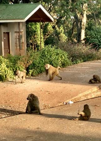 7-3-17 to 7-5-17 Ngorongoro Conservation Area, Tanzania