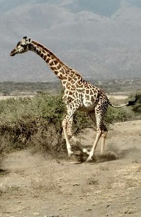 7-5-17 to 7-7-17 Serengeti National Park, Tanzania