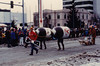 February 21, 1981 - (Anchorage, Alaska) - Ranier Beer pulling sled at the annual Fur Rendezvous Festival parade.
