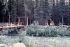 July 9, 1981 - (near Denali National Park, Alaska) - Jer-a-Tad Cabins