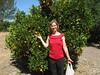 Picking more oranges