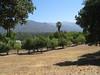 Ojai View