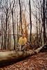 David & Max near Godelhausen  (April 1, 1990 / Godelhausen, Rheinland-Pfalz, Germany) -- David & Max