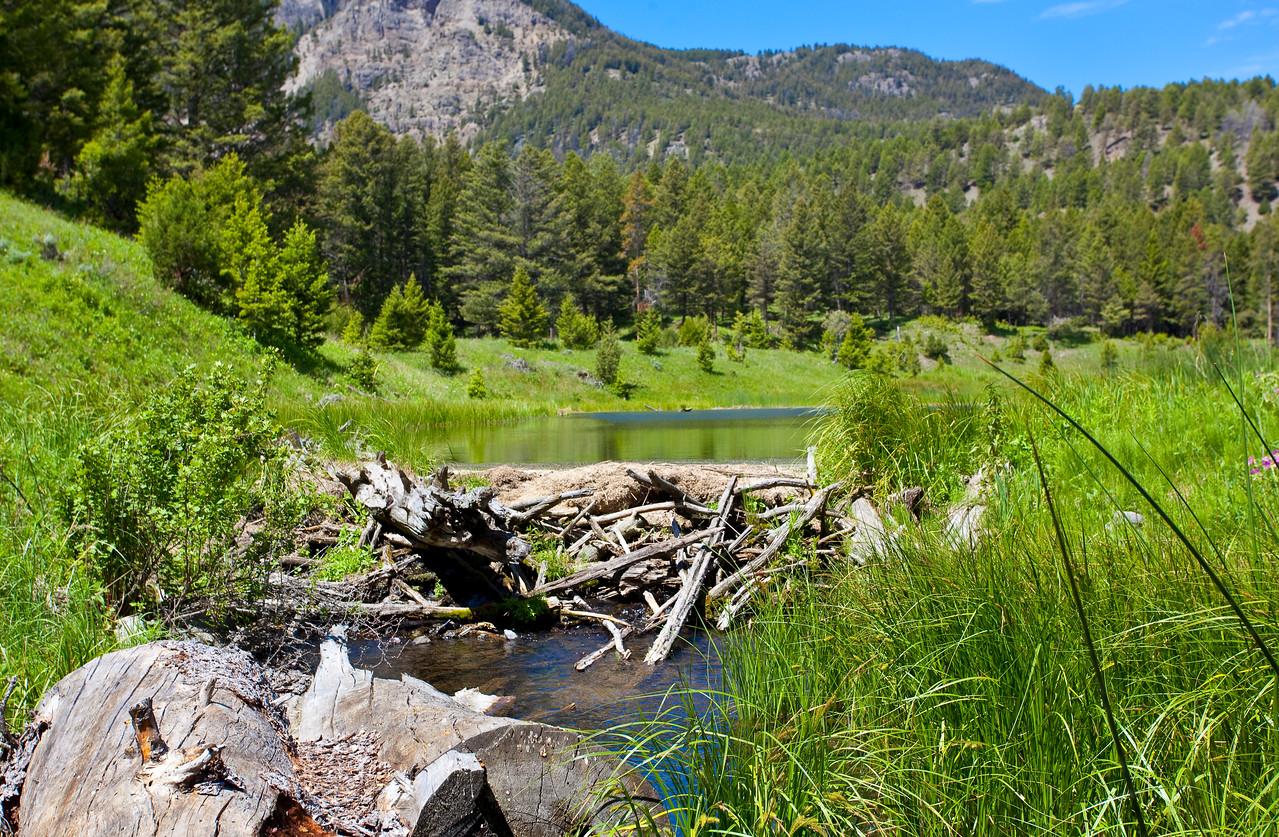 Beaver Ponds Trail Mammoth Yellowstone